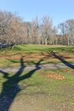 Alberi al Central Park Immagini Stock Libere da Diritti