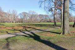 Alberi al Central Park Fotografia Stock