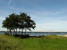 alberi al fiordo fotografie stock libere da diritti
