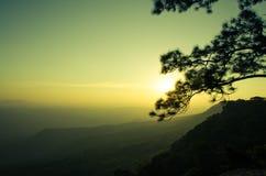Alberi al tramonto: Siluetta Fotografie Stock