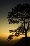 Alberi al tramonto: Siluetta Immagine Stock