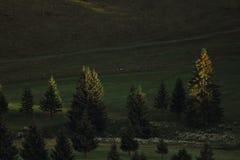 Alberi alla luce di tramonto Immagine Stock Libera da Diritti
