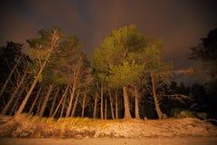 Alberi alla notte Fotografie Stock Libere da Diritti