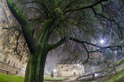 Alberi alla notte a Lucca del centro, Italia Immagine Stock Libera da Diritti