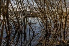 Alberi alle banche di Loch Lomond fotografie stock libere da diritti