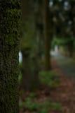 Alberi allineati con muschio in parco Fotografia Stock Libera da Diritti
