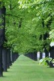 Alberi allineati verde Immagini Stock Libere da Diritti