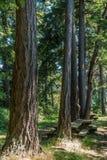 Alberi alti con la Tabella di picnic Immagini Stock