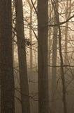 Alberi & nebbia Fotografia Stock