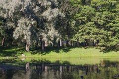Alberi in anticipo di autunno Fotografia Stock