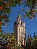 Alberi arancioni della cattedrale Immagine Stock Libera da Diritti