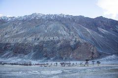 Alberi asciutti della montagna in valle Immagine Stock