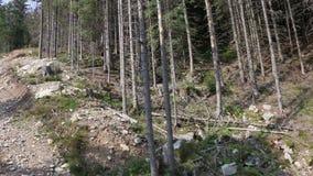Alberi asciutti in montagne di Tatra, metraggio della cabina di funivia, pentola della macchina fotografica, carrello, movimento  video d archivio