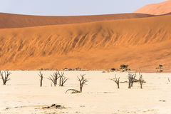 Alberi asciutti morti distanti della valle di DeadVlei al deserto di Namib Immagine Stock