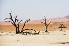 Alberi asciutti morti vicini della valle di DeadVlei al deserto di Namib Immagini Stock Libere da Diritti