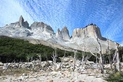 Alberi asciutti nel parco nazionale di Torres del Paine, Cuernos, Patagonia, fotografia stock libera da diritti