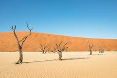 Alberi asciutti nell'area del cratere del deserto a Deadvlei in Sossusvlei Fotografia Stock