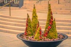 Alberi attillati decorativi con i coni nella ciotola fotografie stock libere da diritti