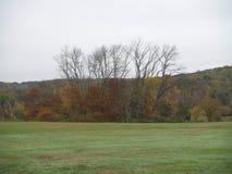 Alberi attraverso un campo verde Fotografie Stock