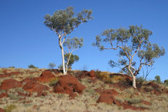 Alberi australiani Fotografia Stock