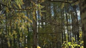 Alberi in autunno stock footage