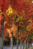 Alberi in autunno Fotografia Stock