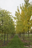Alberi in autunno Immagini Stock