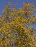Alberi in autunno immagine stock