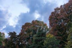 Alberi in autunno con verde giallo rosso delle foglie colourful con la stagione di caduta delle nuvole e del cielo Immagini Stock
