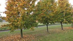 Alberi in autunno alberi dei fogli di autunno Ferrovia nel parco video d archivio
