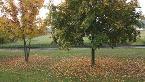 Alberi in autunno alberi dei fogli di autunno Ferrovia nel parco archivi video