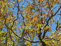 Alberi in autunno, foresta di Tena, fotografia stock libera da diritti