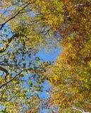 Alberi in autunno, foresta di Tena, dettaglio dei rami fotografie stock libere da diritti