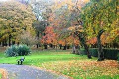 Alberi in autunno a Liverpool Fotografia Stock Libera da Diritti