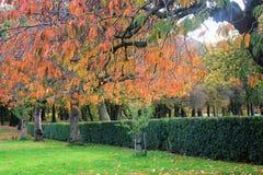 Alberi in autunno a Liverpool Fotografie Stock