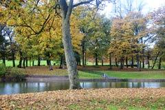 Alberi in autunno a Liverpool Immagine Stock