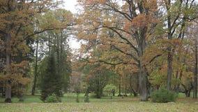 Alberi in autunno nella foresta del parco, natura, stagione, albero, giallo stock footage
