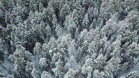 Alberi bianchi di inverno in foresta archivi video