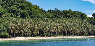 Alberi bianchi di Sandy Beaches Lined With Coconut nelle Filippine fotografia stock