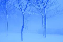Alberi bianchi nell'inverno blu Fotografia Stock