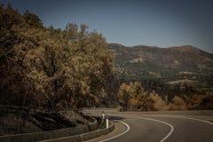 Alberi bruciati accanto alla strada su Sardegna Fotografia Stock