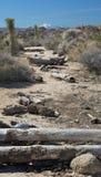Alberi caduti del deserto fotografia stock libera da diritti