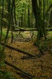 Alberi caduti in un burrone in una foresta di autunno Fotografie Stock