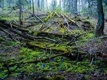 Alberi caduti in una foresta Fotografia Stock