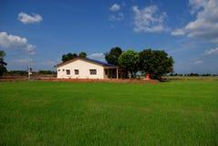 Alberi, casa dell'azienda agricola, campo di risaia Immagine Stock