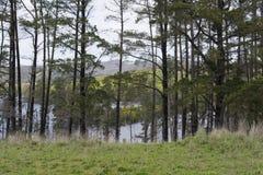 Alberi che circondano il bacino idrico di Myponga, Australia Meridionale Fotografia Stock