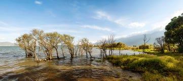 Alberi che crescono dal lago con le colline verdi piacevoli sui precedenti Fotografia Stock