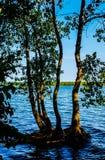Alberi che crescono nel lago Ontario immagine stock libera da diritti