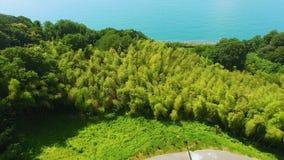 Alberi che crescono sui pendii di collina al litorale, stazione turistica estiva della spiaggia, bella natura archivi video