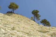 Alberi che crescono sull'orlo delle rocce leggere contro il cielo Fotografia Stock Libera da Diritti